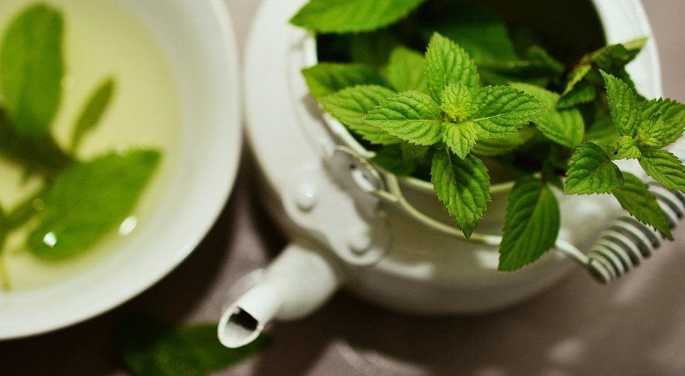 Dentistry and the importance of mint in oral hygiene